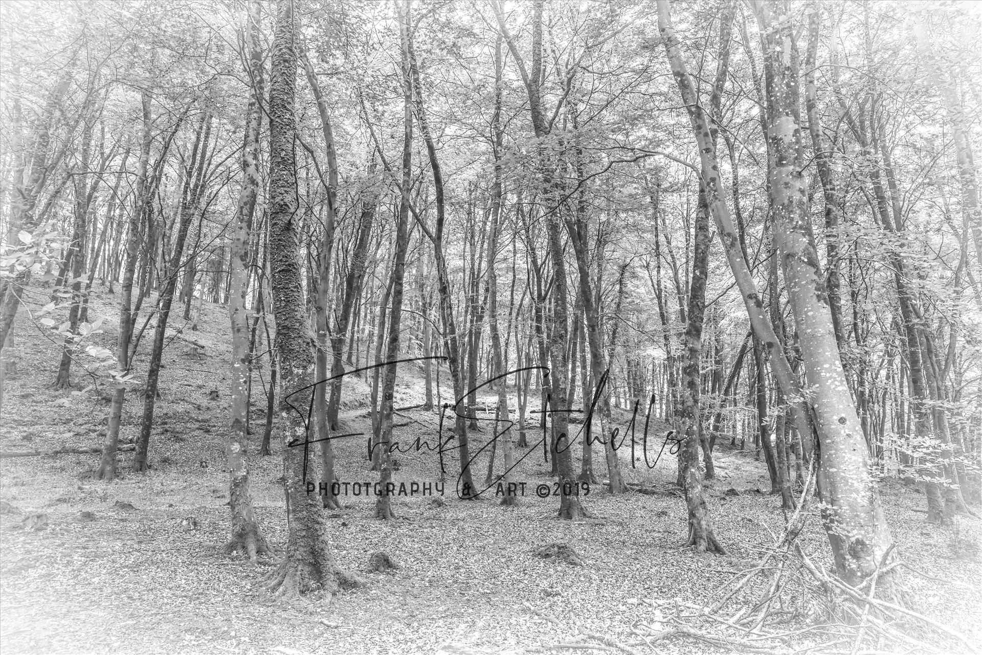 Watersmeet Wood, BW, Sketch Effect - A trip to Watersmeet in Devon. Took a number of images while walking round through the woodland. Did an edit of this to look like a sketch/drawing by Frank Etchells Photography