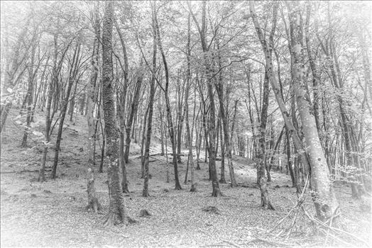 Watersmeet Wood, BW, Sketch Effect - A trip to Watersmeet in Devon. Took a number of images while walking round through the woodland. Did an edit of this to look like a sketch/drawing
